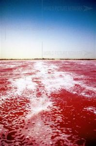 Uniknya Danau Garam Di Senegal